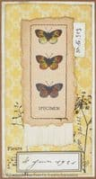 Creative Expressions  Sam Poole A5 Clear Stamp Set - Nature Finds